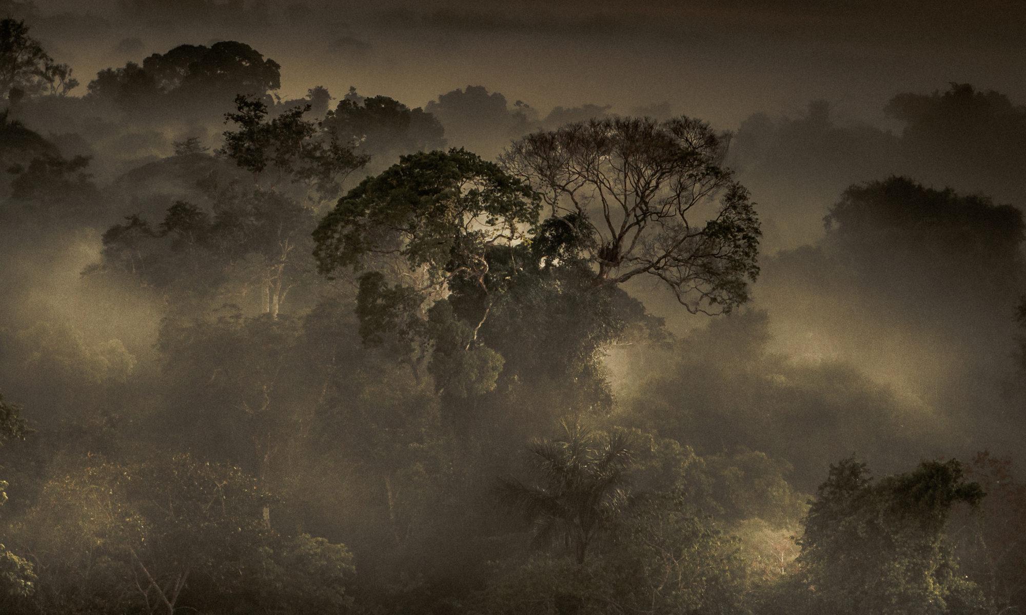 Amazonian Leapfrogging